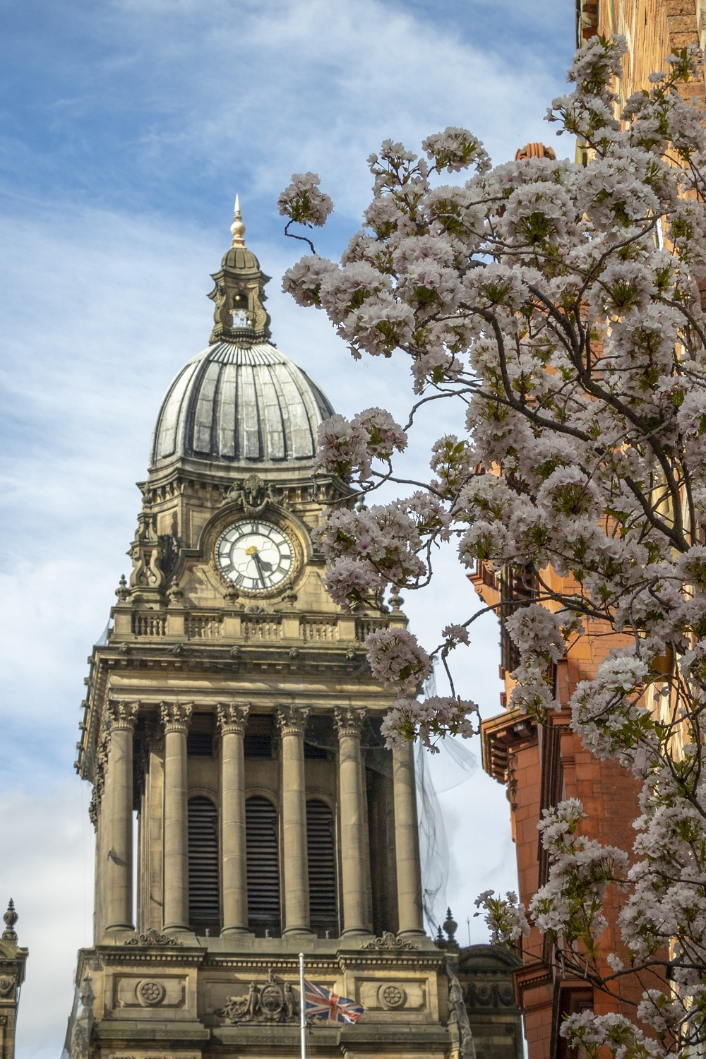 Leeds Town Hall through blossom, credit Carl Milner