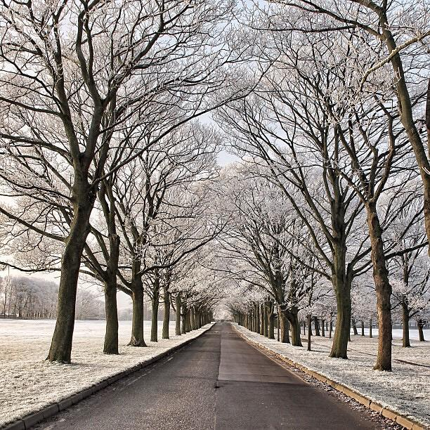 Trees lining the drive at Temple Newsam - credit Carl Milner